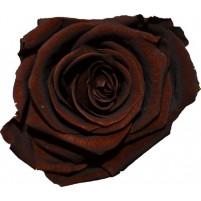 Dárková stabilizovaná růže - hnědá