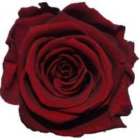 Dárková stabilizovaná růže - rudá