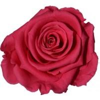 Dárková stabilizovaná růže - tmavě růžová