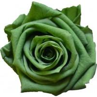 Dárková stabilizovaná růže - zelená