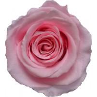 Dárková stabilizovaná růže - světle růžová