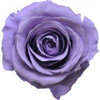 Dárková stabilizovaná růže - lila