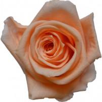 Dárková stabilizovaná růže - broskvová