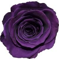 Dárková stabilizovaná růže - fialová