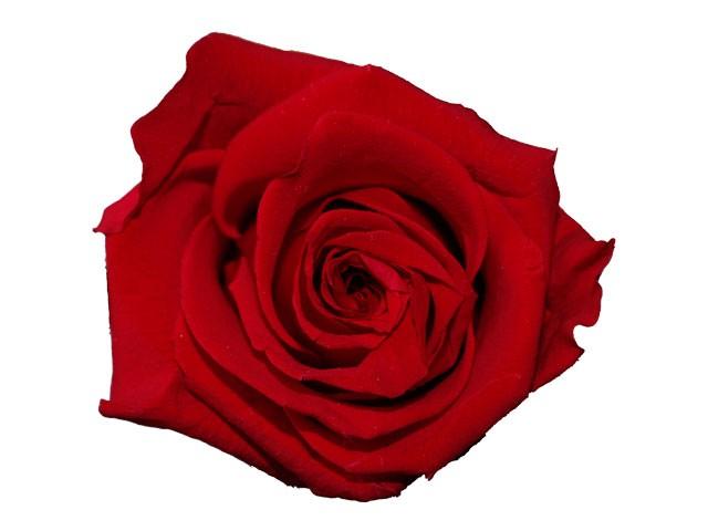 Dárková stabilizovaná růže - červená