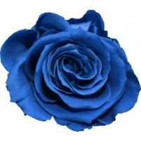 Dárková stabilizovaná růže - královská modř