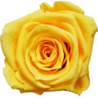 Dárková stabilizovaná růže - žlutá
