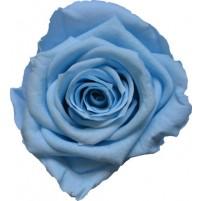 Dárková stabilizovaná růže - nebeská modř