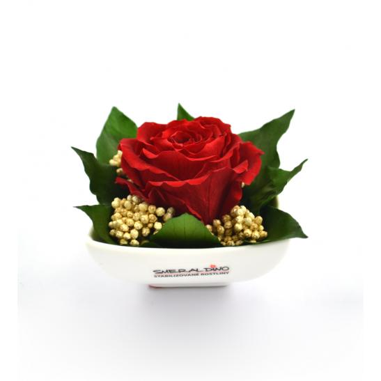 Iva (Aranže hlava růže standard)