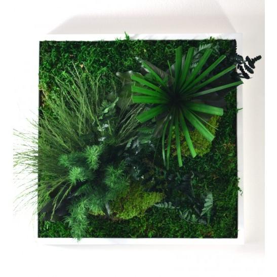 Daniel (Obraz z mechu a stabilizovaných rostlin)