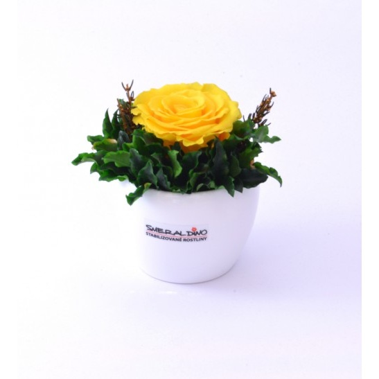Bea LIGHT (Stabilizovaná růže v květináčku)