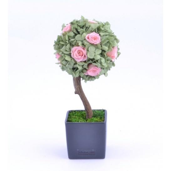 Stromeček hortenzie a růže VIII (Originální stromeček ze stabilizovaných rostlin)