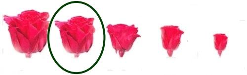 Hlavy růží - extra 6 ks