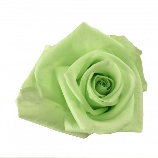 Dárková stabilizovaná růže - světle zelená