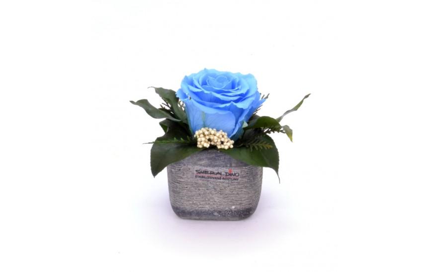 Sára (Aranže jedné hlavy růže v keramickém obalu)