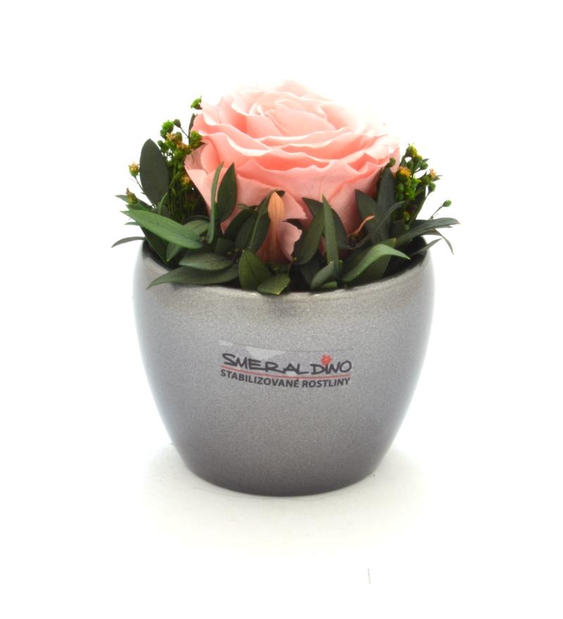 Bea DARK (Stabilizovaná růže v květináčku)