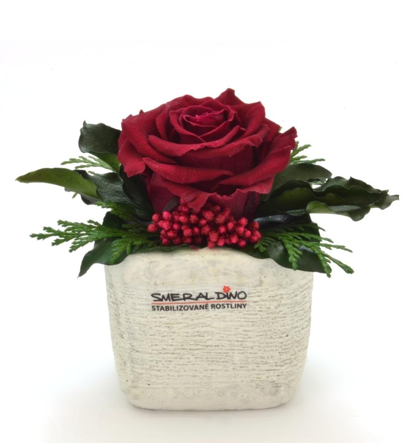 Sára LIGHT (Aranže jedné hlavy růže v keramickém obalu)