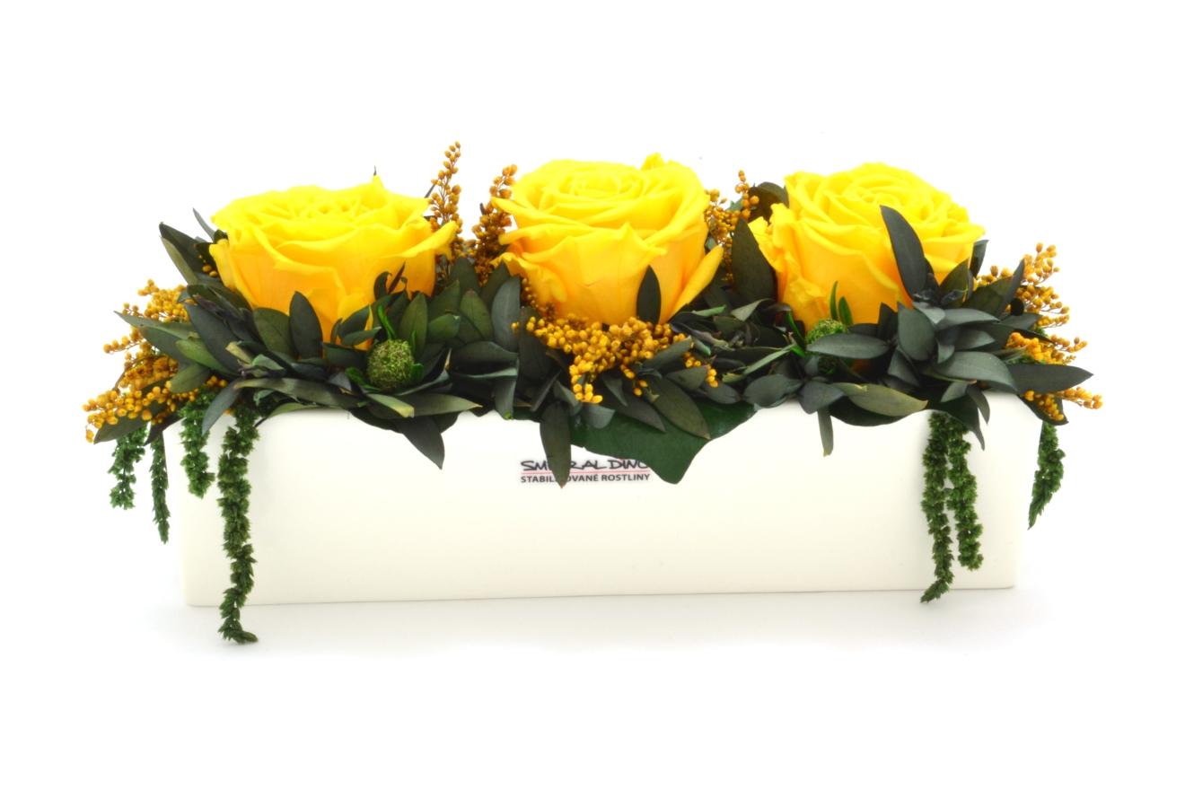 Elen (Aranže 3x hlava stabilizovaná růže v truhlíku)