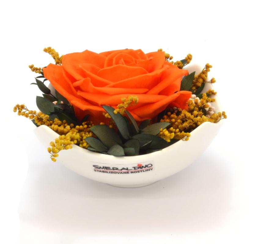 Tera (Aranže 1x stabilizovaná růže v misce)