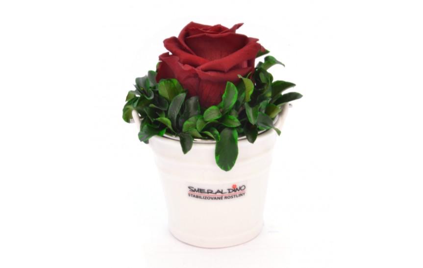 Ida (Stabilizovaná růže v kyblíčku)