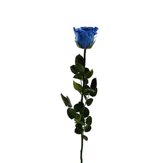 Stabilizovaná růže - královská modř (Volné balení, Royal blue)