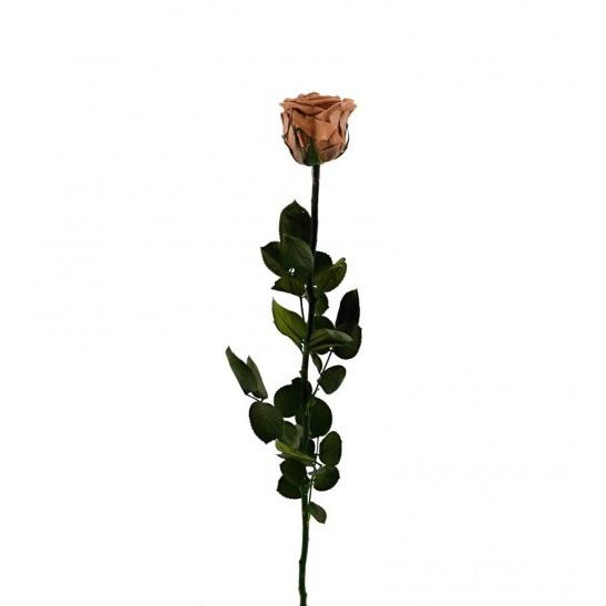 Stabilizovaná růže - světle hnědá (Volné balení, Light brown)