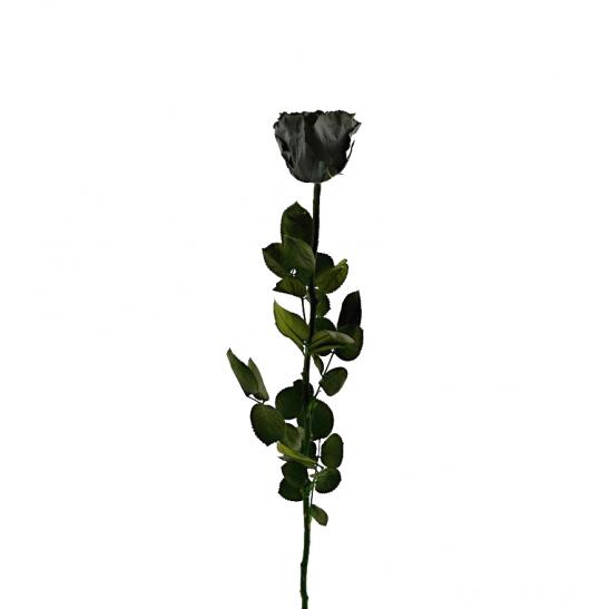Stabilizovaná růže - černá