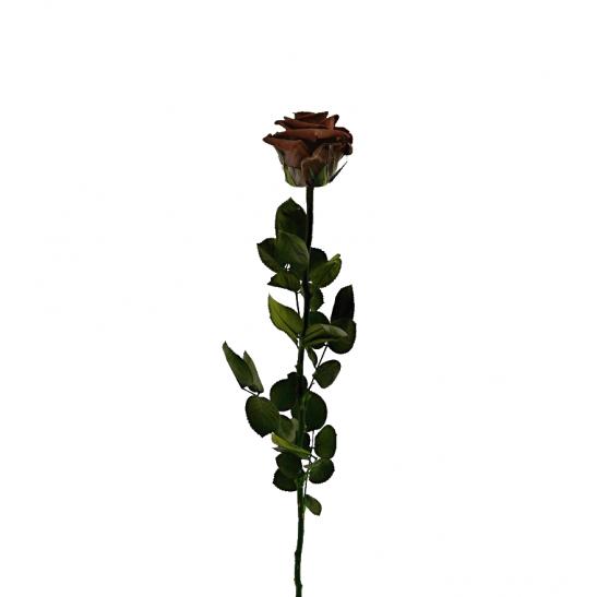 Stabilizovaná růže - hnědá (Volné balení, Brown)