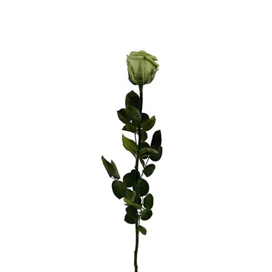 Stabilizovaná růže - zelená (Volné balení, Green tea)