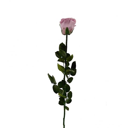 Stabilizovaná růže - lila (Volné balení, Lila)