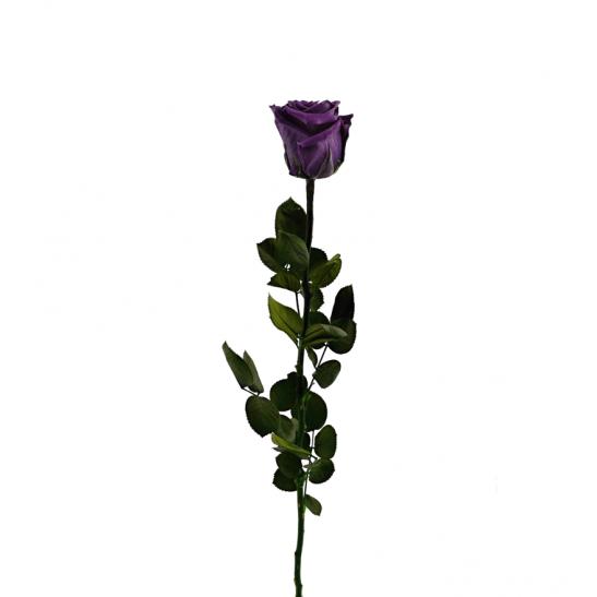 Stabilizovaná růže - fialová (Volné balení, Purple)