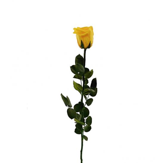 Stabilizovaná růže - žlutá (Volné balení, Safron yellow)