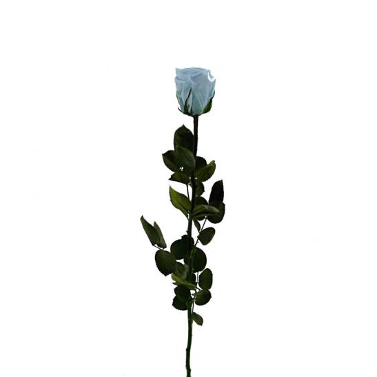 Stabilizovaná růže - nebeská modř (Volné balení, Sky blue)