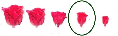 Hlavy růží - mini 12 ks
