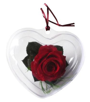 Lady (Srdce - růže - standard)