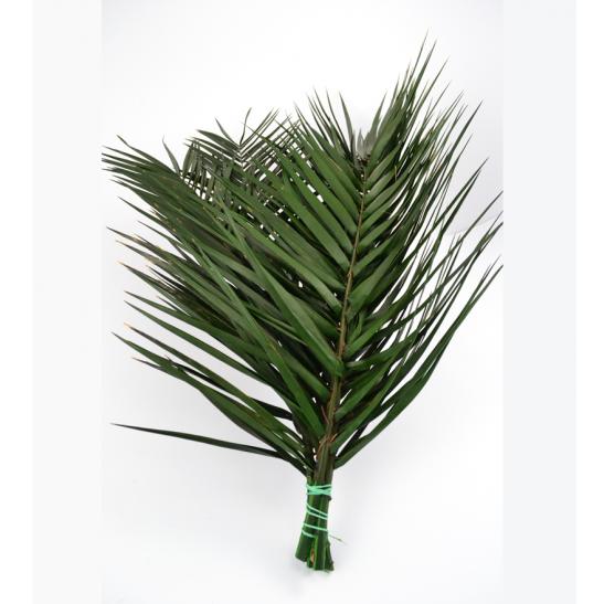 Listy palmy Phoenix
