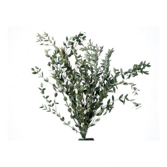 Parvafolia