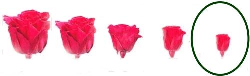 Hlavy růží - princess 16 ks