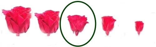 Hlavy růží - standard 6 ks