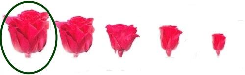 Hlavy růží - premium 4 ks
