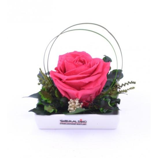 Dita (Aranže hlava růže premium)