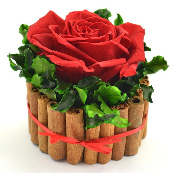 Skořice + pitosporum + hlava růže premium