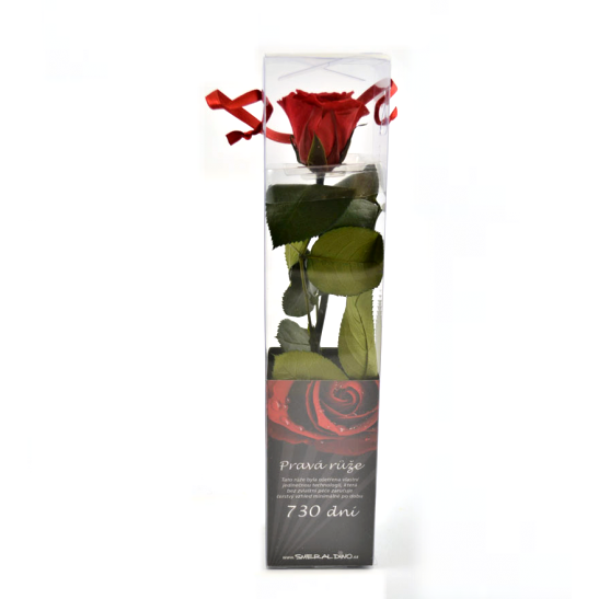 Dárková stabilizovaná růže MINI - červená (Dárkové balení, Red)