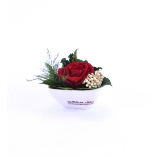 Aneta (Srdce v květináčku ve tvaru srdce)