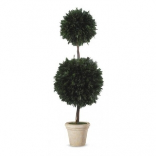 Salignum 2 ball tree